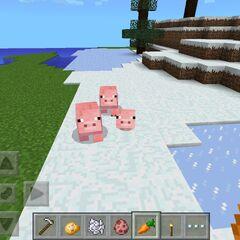A Pig Family