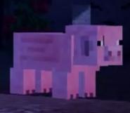 Mcsm normal pig