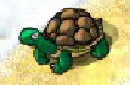 File:Turtle prank spell.png