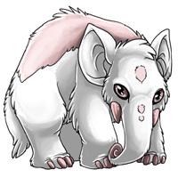 File:Albino eledon.jpg