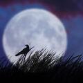 Mond mit Vogel.jpg