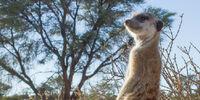 Melton Lemurs
