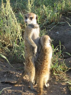 Panthera and Zak