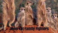 Meerkat Family Fighters