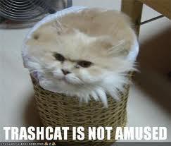 File:Trashcat.jpg