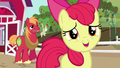 "Apple Bloom ""you are the most awesome sister ever!"" S5E17.png"