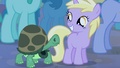Dinky with a tortoise S4E14.png