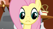 Fluttershy is confused S2E19