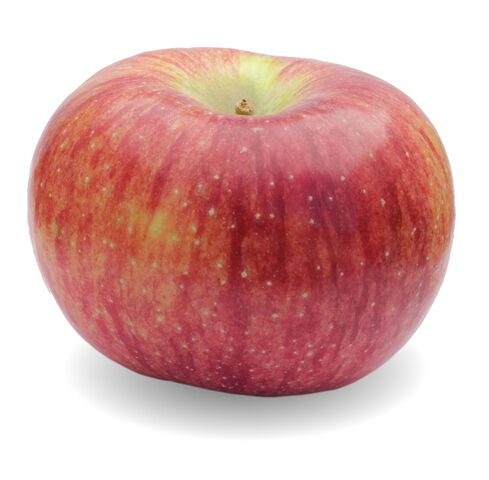 File:An Apple named Cortland.jpg