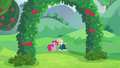 Pinkie and Svengallop in an apple grove S5E24.png