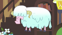 Sheep with wet wool S7E12