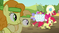 Apple Bloom and Orchard Blossom take the lead S5E17.png