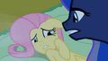 Fluttershy scared2 S02E04.png