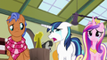 "Shining Armor ""it's small like her!"" S7E3.png"