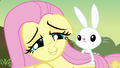 Fluttershy making cute Face S2E22.png