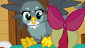 Gabby gets excited in Apple Bloom's face S6E19.png