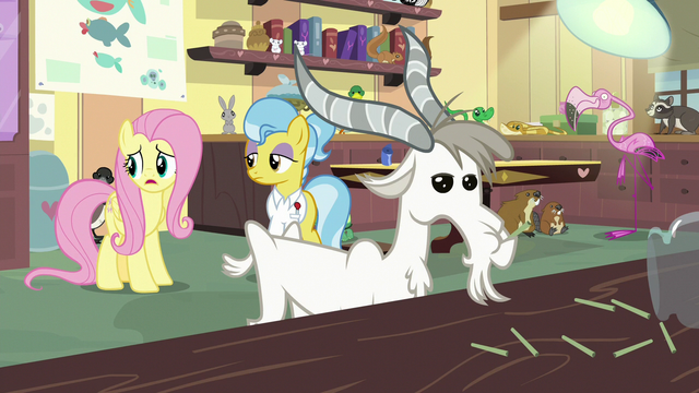 """File:Fluttershy """"all these poor little animals are hurt"""" S7E5.png"""