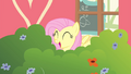 Fluttershy happy while singing S4E14.png