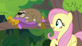 """Fluttershy """"believe in our dreams"""" S7E5.png"""