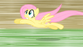 Fluttershy dolphin dive S01E22.png