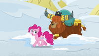 "Pinkie Pie ""these yak snow beds are"" S7E11"
