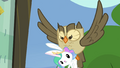 Owlowiscious carries Angel S4E21.png