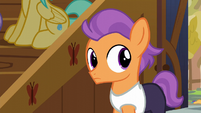Tender Taps hears Apple Bloom S6E4