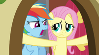 Rainbow Dash agitating Fluttershy S2E21