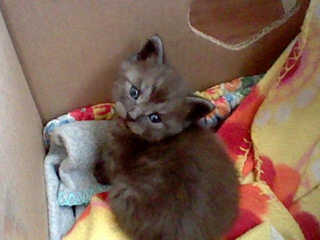 File:Bronyboybro cats 3.jpg