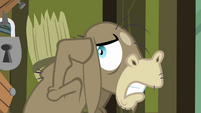 Cranky Doodle flinches at Pinkie's voice S02E18
