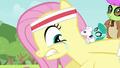 Fluttershy trying not to cry S2E22.png