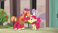 Apple Bloom encouraging Big McIntosh S7E8