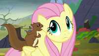 Squirrel chittering in Fluttershy's ear S5E23