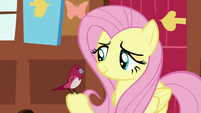 Red robin perches on Fluttershy's hoof S7E5