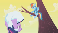 Rainbow Dash smiling from a tree S1E11