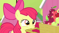 Apple Bloom looking S4E17.png