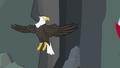 Bald eagle not headless S2E7.png