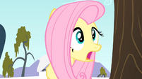 Fluttershy surprised S4E07
