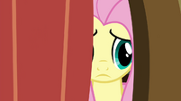 Fluttershy peeking outside S4E16