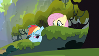 Rainbow Dash here it comes S3E9