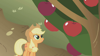 Applejack apples S1E04