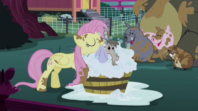 File:Fluttershy cleaning a goat S5E3.png