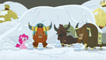 Pinkie and yaks in the new yak eating hut S7E11.png