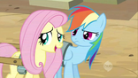 Fluttershy looking away from Dash S2E14