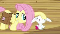 Fluttershy petting Angel S03E11