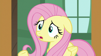 "Fluttershy ""they don't have anywhere to go!"" S7E5"