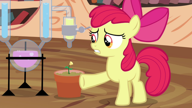"""File:Apple Bloom """"of this potion-makin'"""" S4E15.png"""