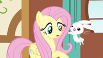 Fluttershy incoming bunny S3E13