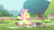 Fluttershy with her animal friends S4E14.png