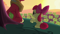 "Apple Bloom ""I just don't understand why"" S5E17.png"